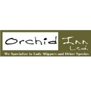 Orchid Inn orchids