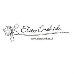 Elite Orchids