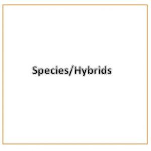 Species/Hybrid
