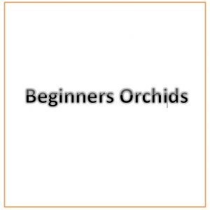 Beginners Orchids